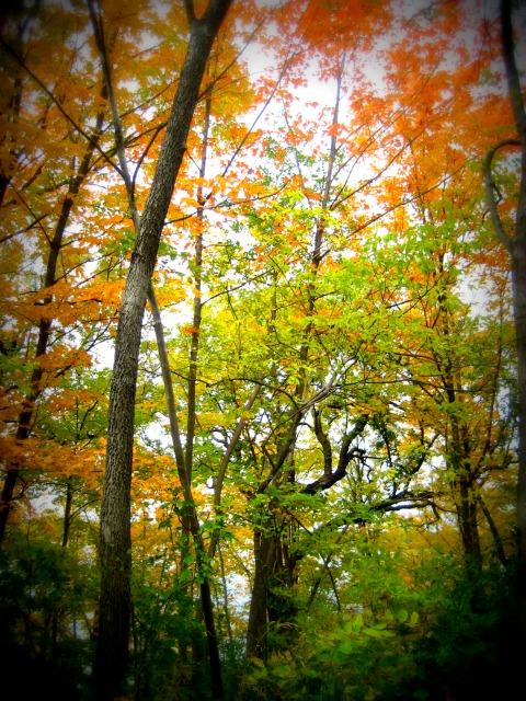 Beautiful leaves of Minneapolis